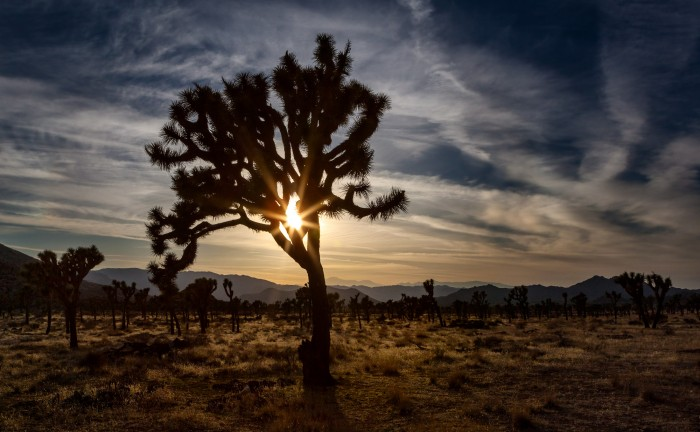 Untitled - Joshua Tree National Park, California - April 2012